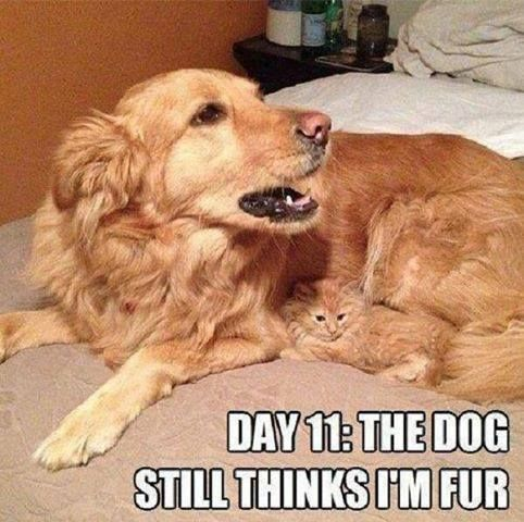 Let Us Cheer Up Your Monday Blues Sprout Mondays Monday Mondayitis Dog Cat Kitten Love Cat And Dog Memes Funny Cat Memes Funny Animals
