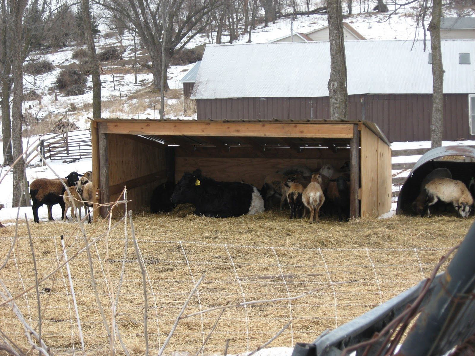 Sheep Shelter Google Search Gardening And Animals