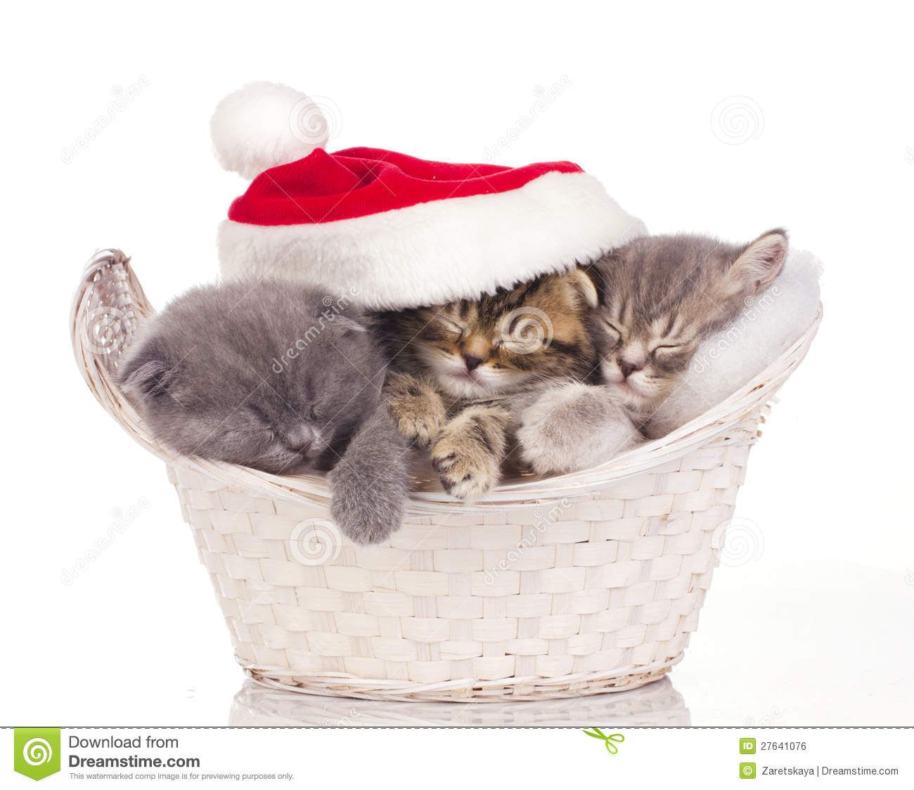 Kittens sleeping with a Santa hat over them.
