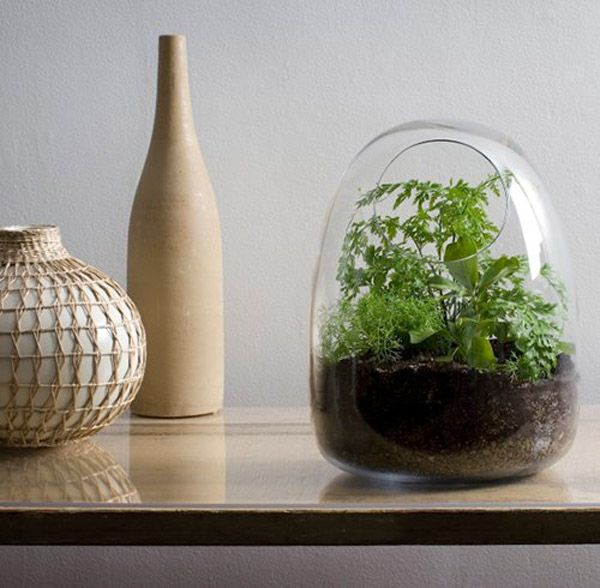 Hand Blown Glass Herb Garden Terrarium #herb #garden