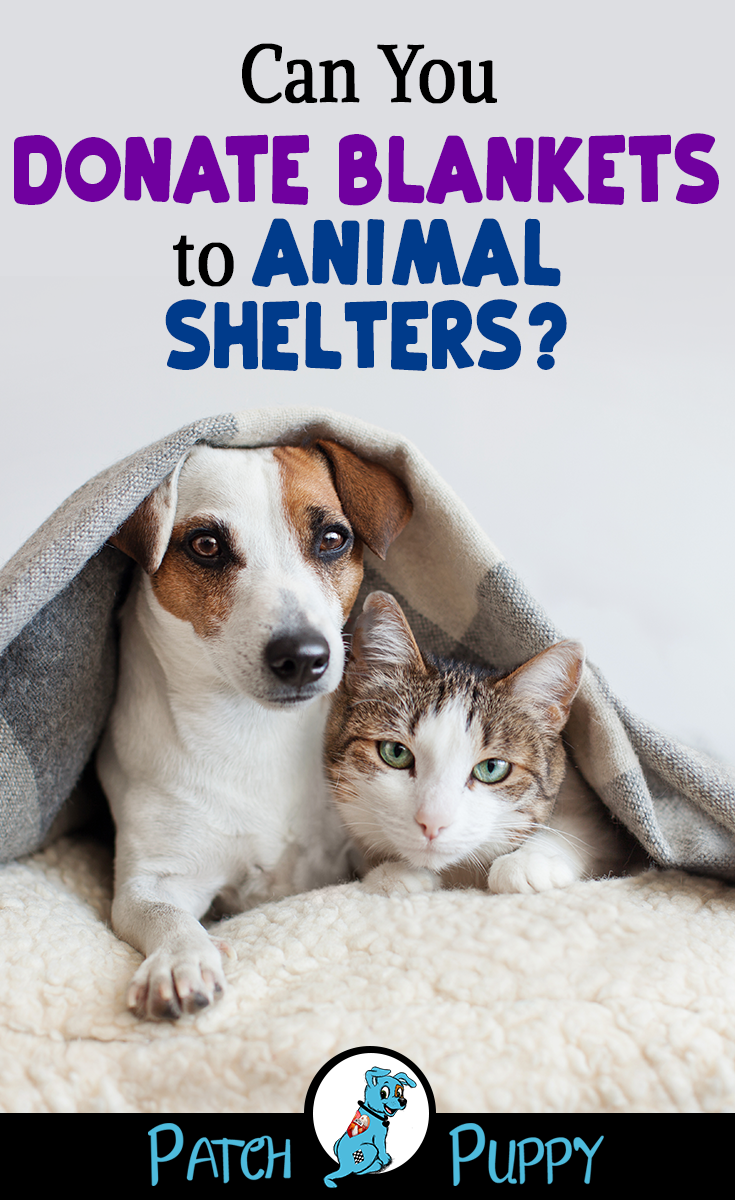 Things To Donate To Animal Shelters The Dos And The Most