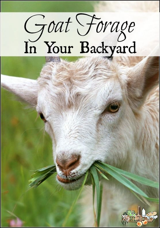 Grow a Goat Salad Bar in your Backyard. | Raising goats ...