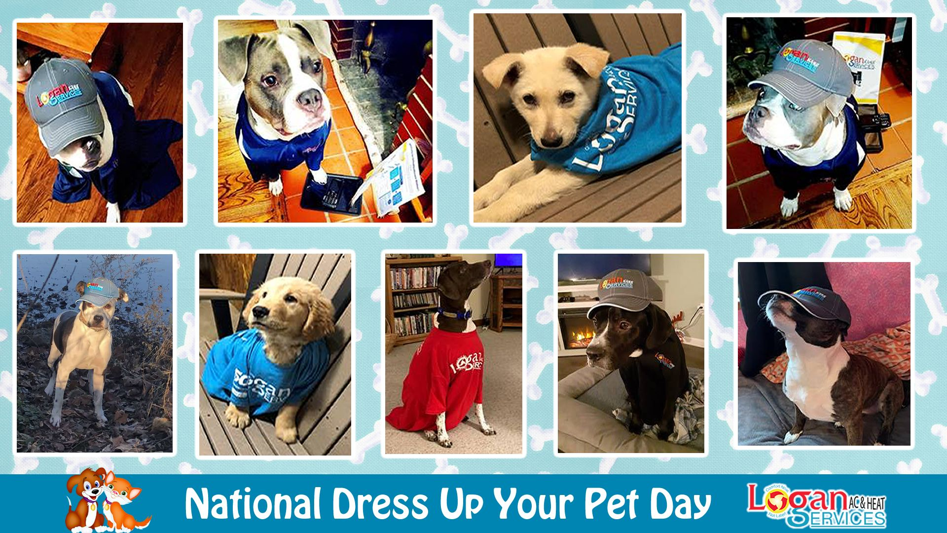 Dress Up Your Pet Day in 2020 Pet day, Your pet, Pets