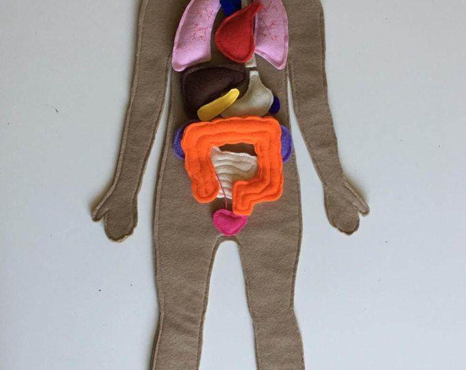 Anatomía humana sentida conjunto, sentía humano órganos ...