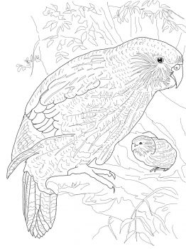 Kakapo Parrot Bird Coloring Pages Animal Coloring Pages