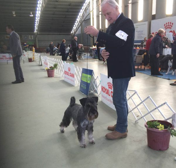 Want To Win In The Showring Then Stand And Deliver Dog Training