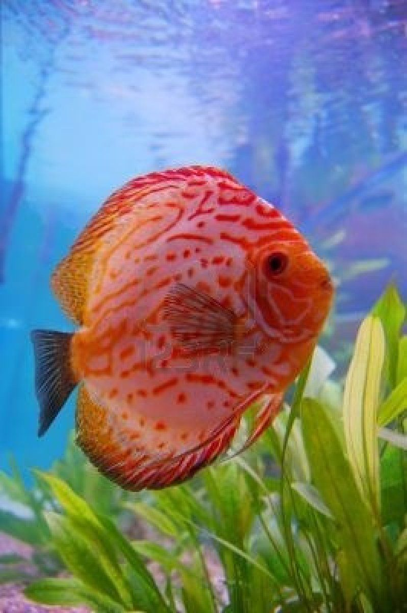 tropical aquarium fish | Tropical fish | Pinterest | Aquarium fish ...