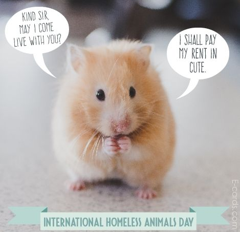 International Homeless Animals Day Cute hamsters, Funny