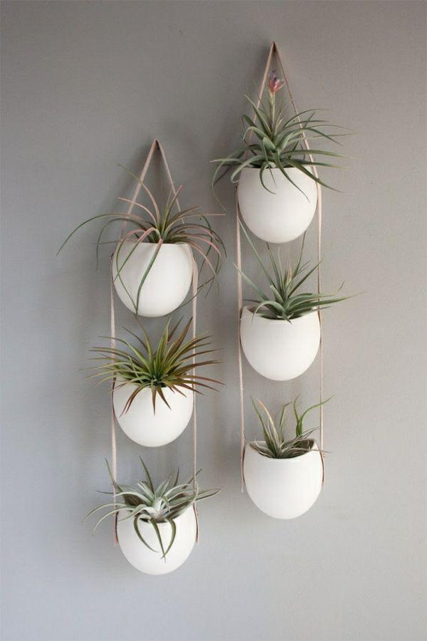 Photo of Hengende stueplanter – bilder av nydelige hengende kurver