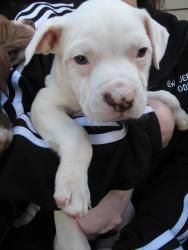 Pin On Jersey Animal Coalition Adopted Dogs