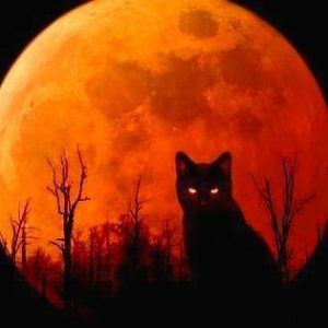 Halloween Facebook Profile Picture Halloween Cat Black Cat