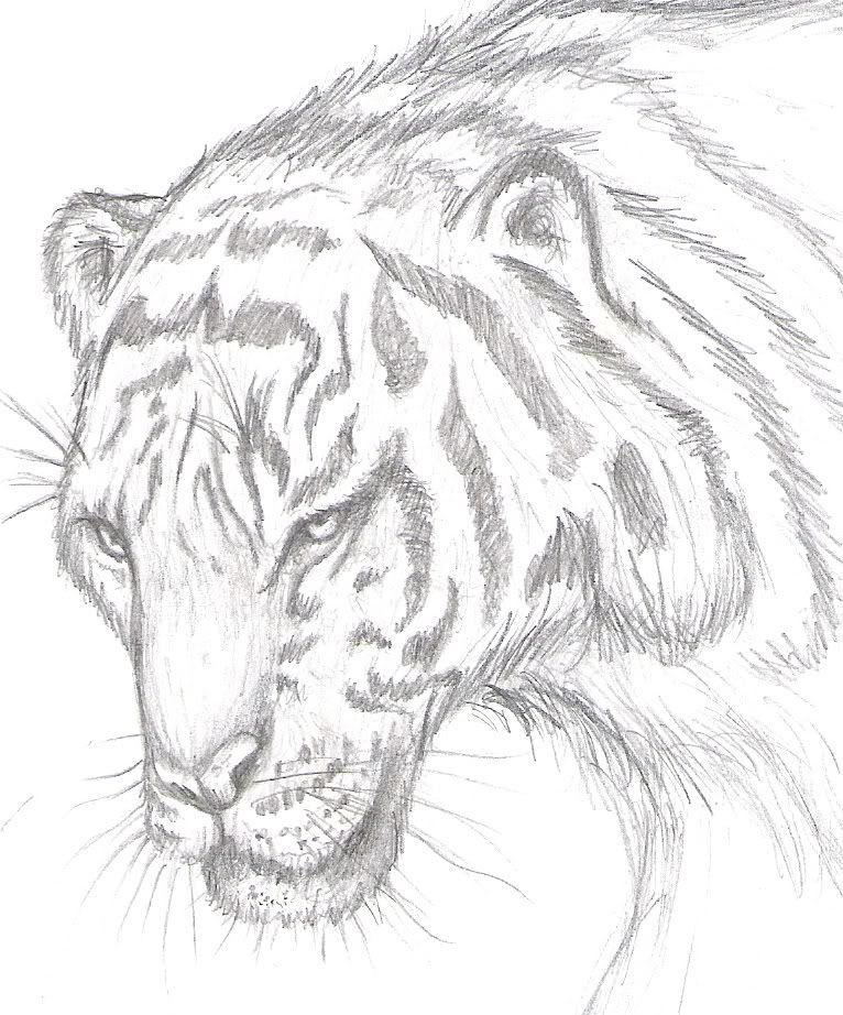 dibujos a lapiz de animales  Buscar con Google  dibujos a lpiz