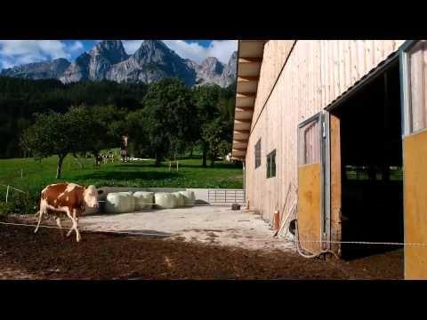 Ein Tag am Bauernhof
