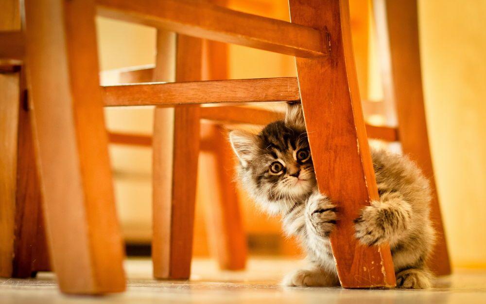 Kartinki Po Zaprosu Shkodlivye Kotyata Kitten Wallpaper Cat Hiding Cute Cats