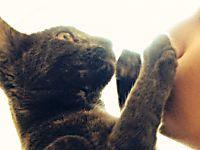 Baciare i gatti uccide, lo dice la scienza
