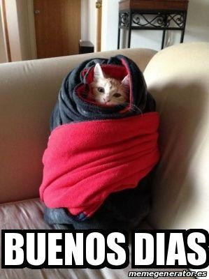 Buenos Dias Frio Meme Risa Gato Imagenes Divertidas Fotos Divertidas De Gatos Animales Bonitos