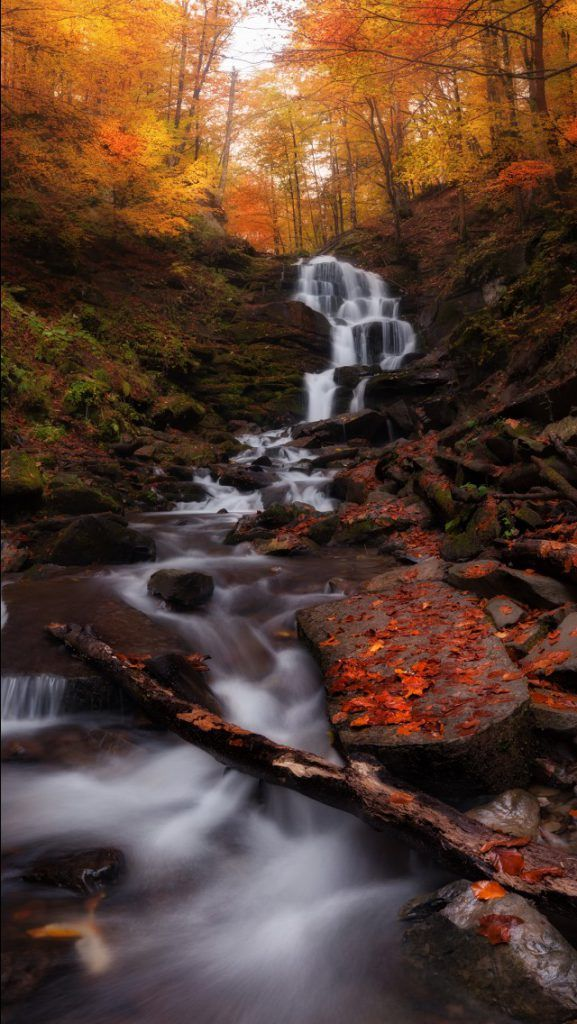 Pin By Hd Wallpaper Screensavers On Hd Wallpapers Dw Gaming Com Download Free With Images Forest Waterfall Autumn Forest Waterfall