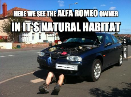 Alfa Romeo Owner With Images Car Stickers Funny Funny Car