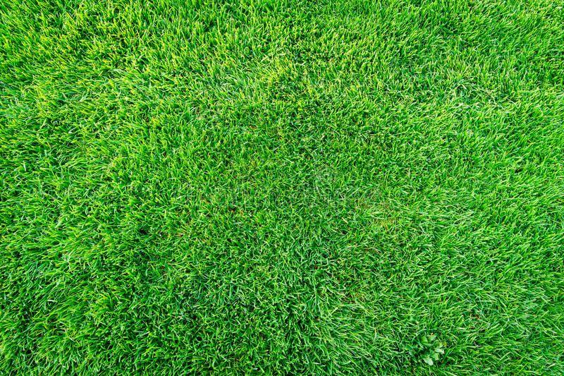 Green grass field background texture pattern green