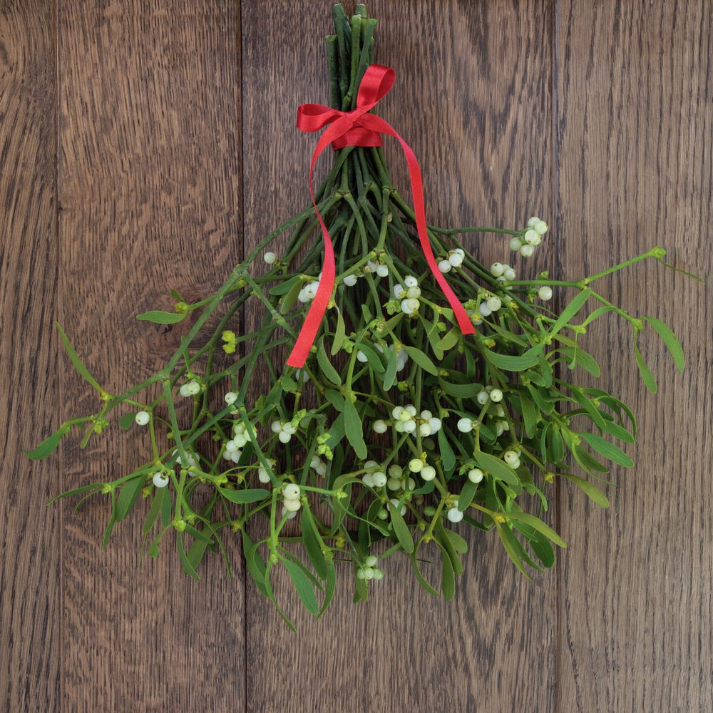 S.F. Map Pinpoints Where To Kiss Under The Mistletoe