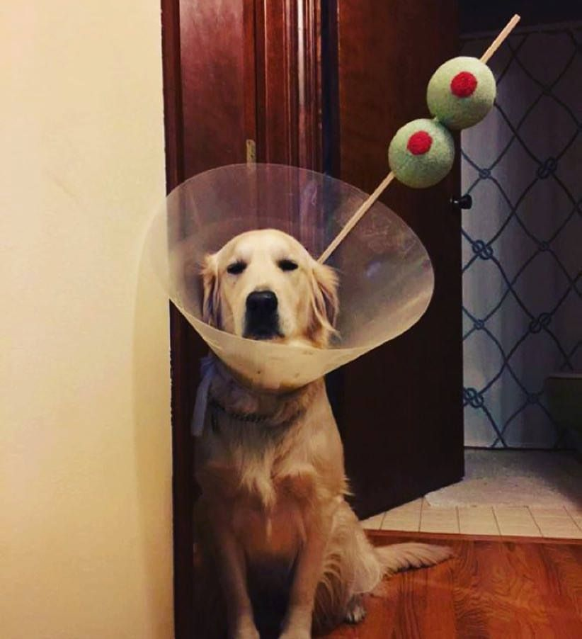 Hilarious Cone Of Shame Dog Halloween Costume Dog Halloween