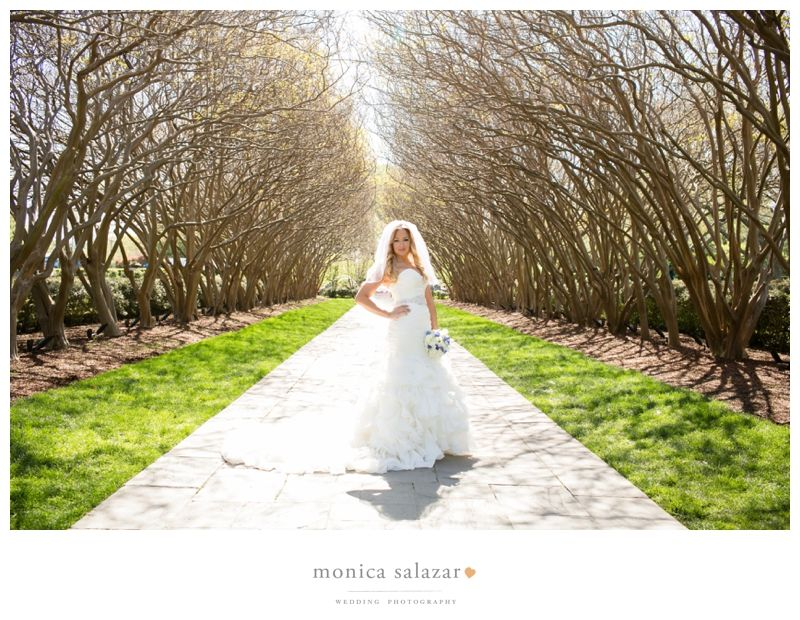 Crepe Myrtle Alley At The Dallas Arboretum Botanical Gardens By Dallas  Wedding Photography And Bridal Portrait