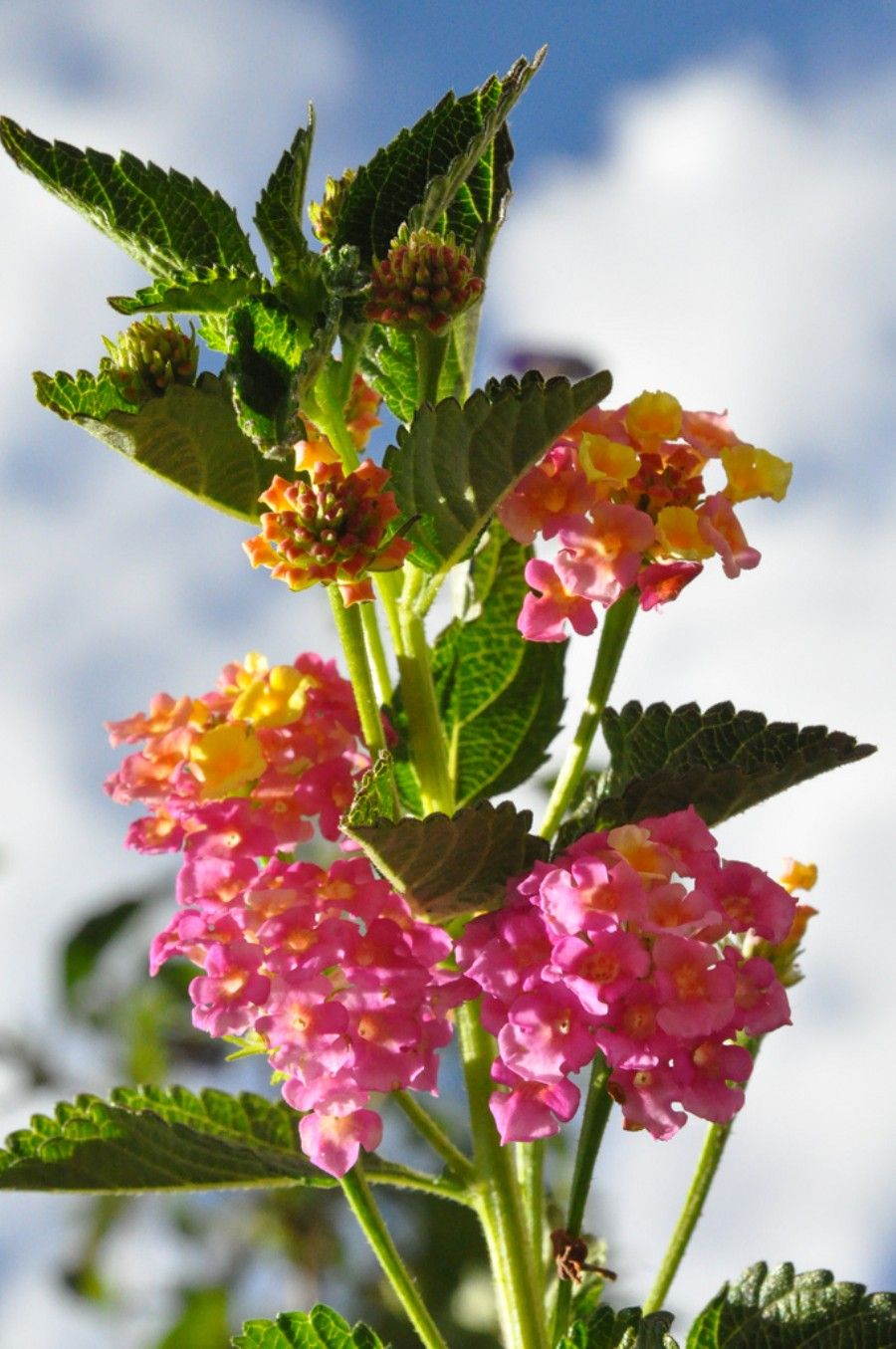 Pin by donna thompson on plants and flowers pinterest butterfly 25 stunning flower photographs that are absolutely beautiful i think the flower is lantana while i love the plant it is probably the only stinky flower i izmirmasajfo Gallery