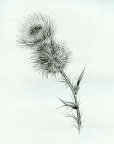 Image result for black and white drawings thistle four peas in a image result for black and white drawings thistle mightylinksfo