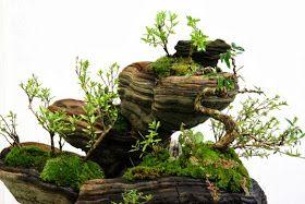 Tienda de Bonsai en Bilbao. Centro de Jardinería especializado.  25 años diseñando, cuidando y formando en bonsai, kokedama, y artes orientales.