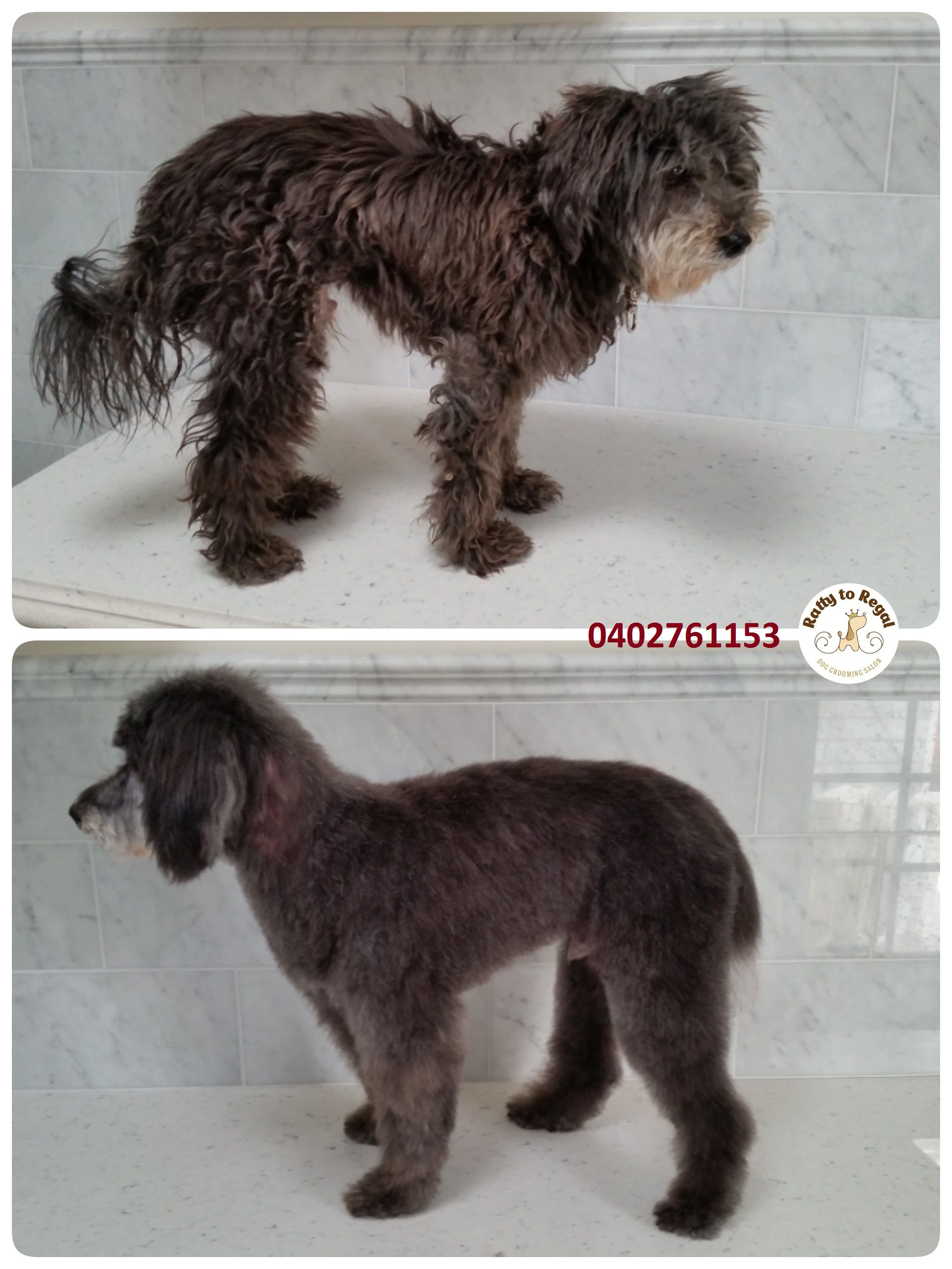 Pin On Before After Dog Grooming Photos