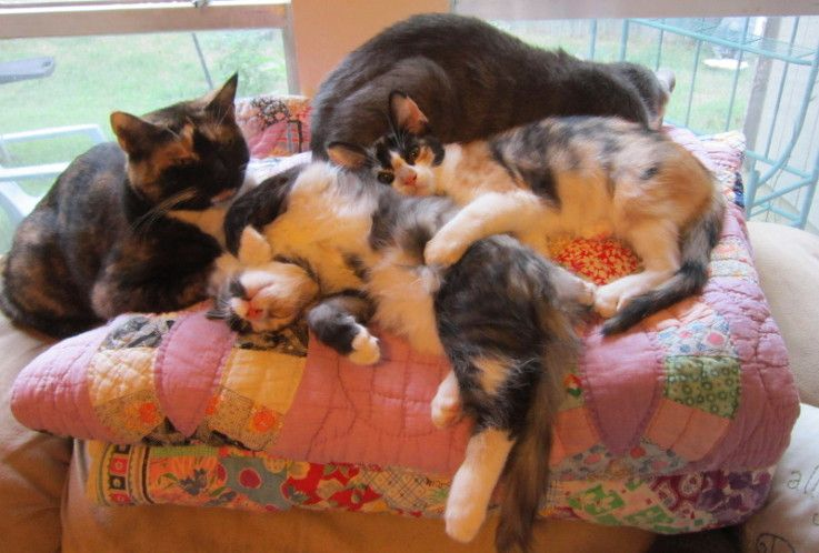 """""""Quilts are cat magnets"""" according to one quilt blogger :))"""