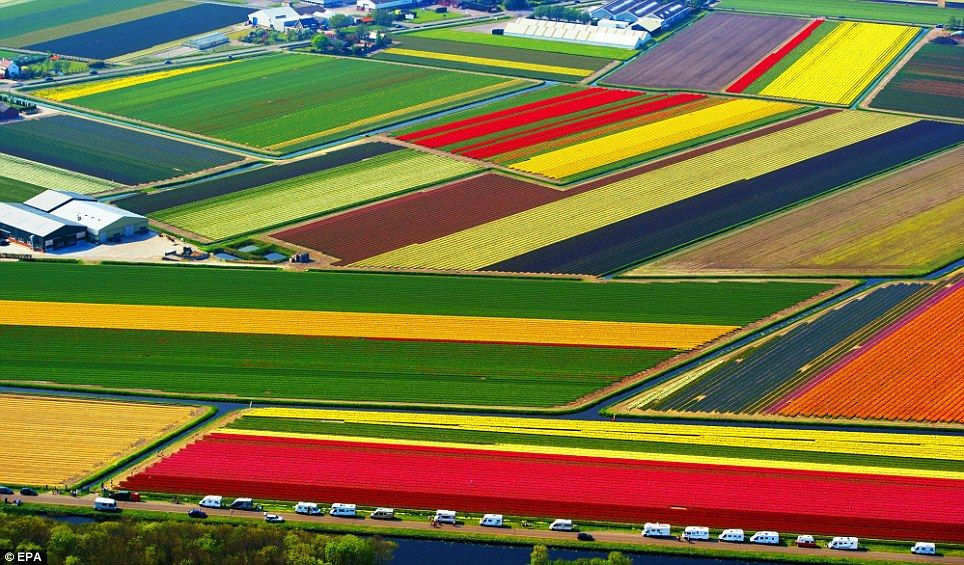 The stunning tulip fields that look like