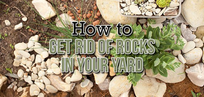 How to Get Rid of Rocks in Your Yard   Backyard ...