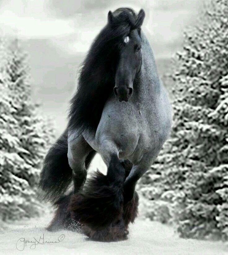 Eine wunderschöne natürliche Schönheit. Ein Pferd, das wieder gut aussieht ... #gypsy
