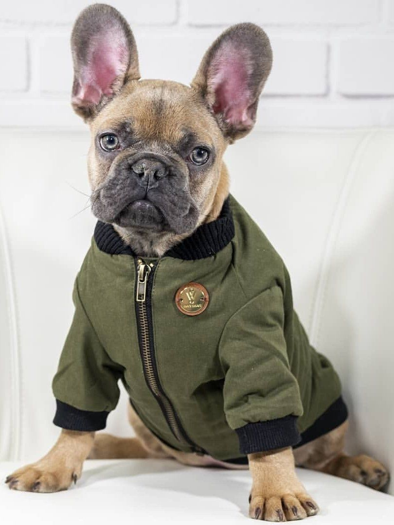 An Upgraded Elevated Take On The Traditional Flight Jacket Encompassing Bold Zippers A Back Pocket With Zipper Closure An Dog Jacket Puppy Clothes Dog Shirt [ 1080 x 810 Pixel ]