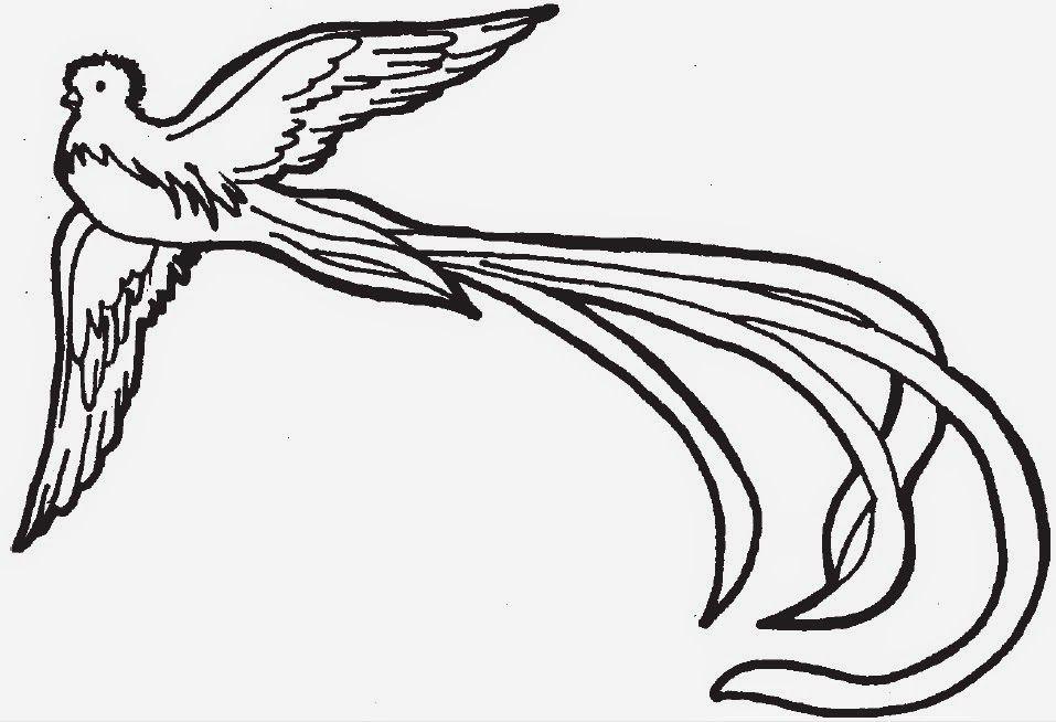 Dibuixos De Vocab Con Imagenes El Quetzal Grabados De Aves