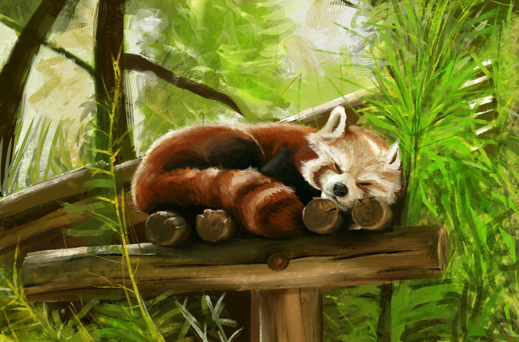 I Painted A Red Panda Post Red Panda Panda Background Panda Art Wallpaper red panda trunk tree nature