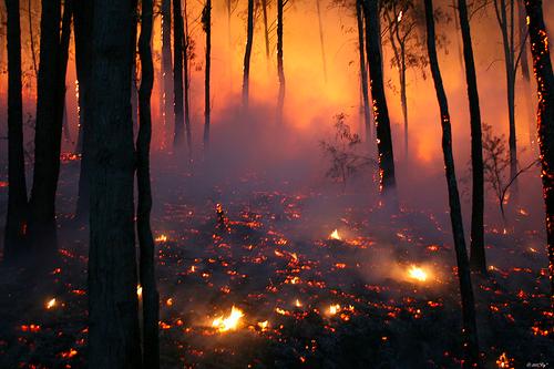 Image result for burning forest