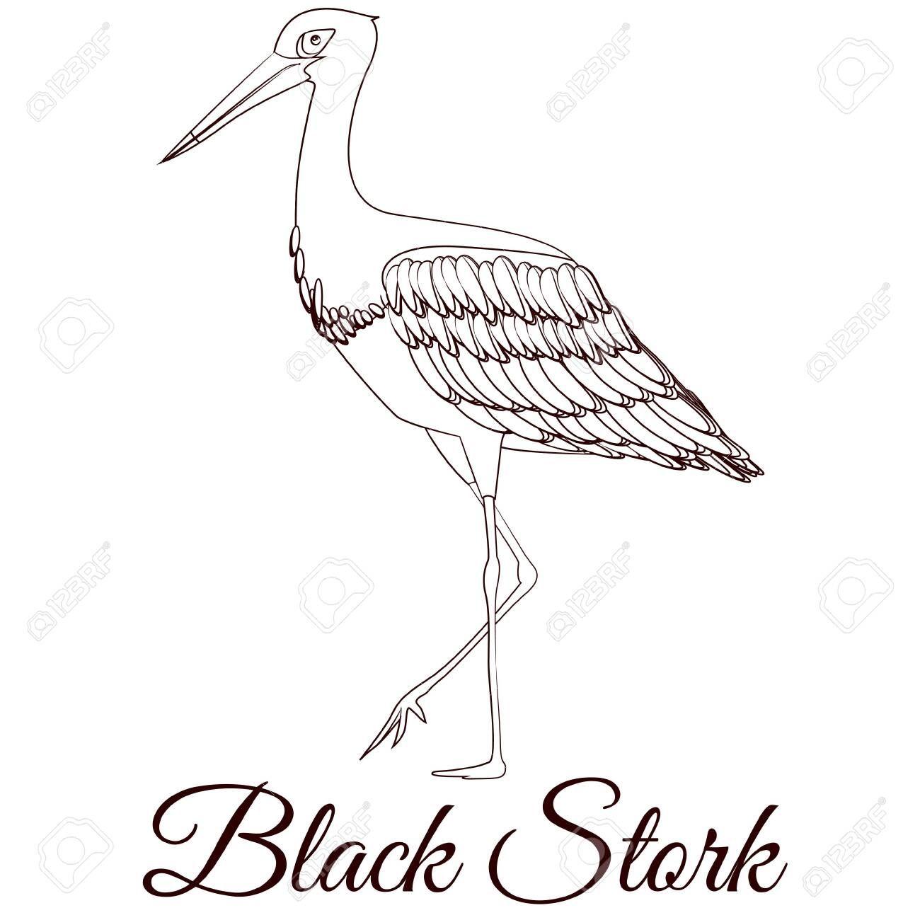 Black Stork Cartoon Bird Coloring Illustration Aff Cartoon Stork Black Illustration Coloring Clip Art Art Movie Posters