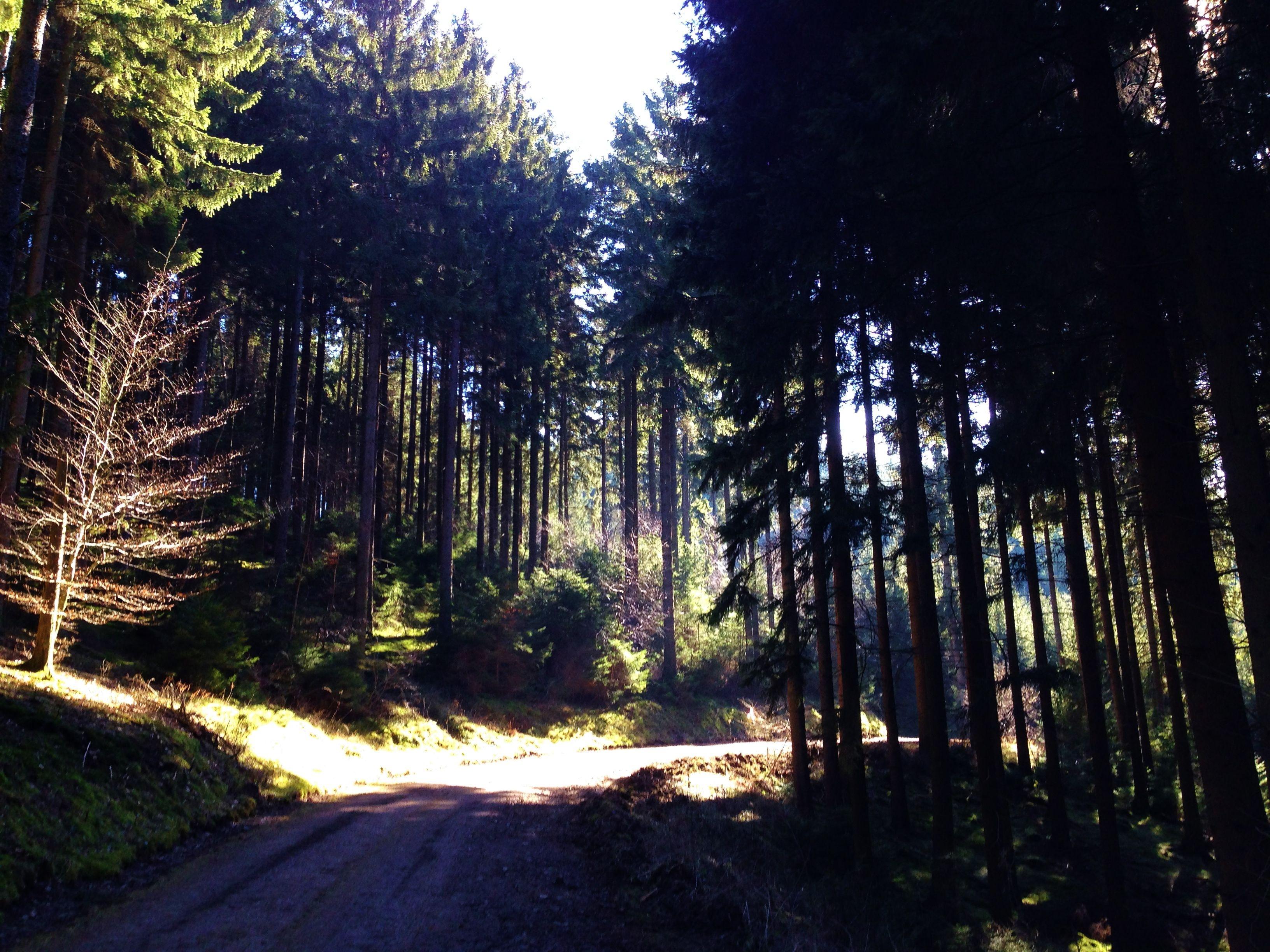 Vetaretus-6 | Sauerland, Germany - Camping, Hiking and more! ·