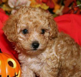 Austin Vurpillat Dahhhhling Its Perfect Cute Animals