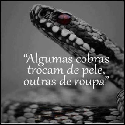 Algumas cobras...