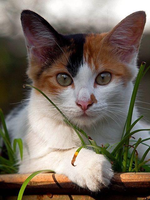670b2e3148062a A cat in grass is a tiger in the jungle.