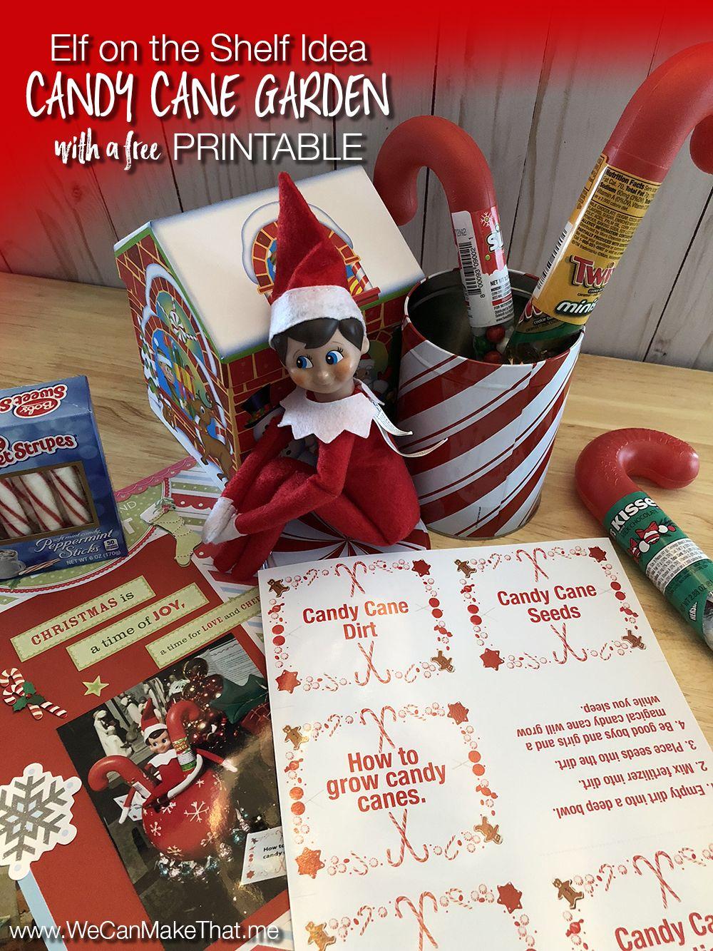 Elf on the Shelf idea Candy Cane Garden Elf on the