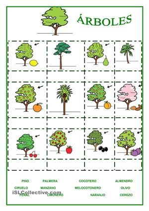 Rboles y frutas cono las plantas for Arboles frutales de hoja caduca
