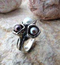 anello Coclide