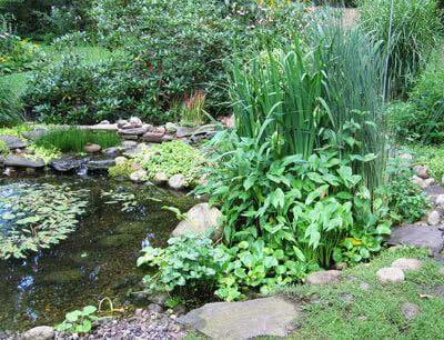 Bog Garden Or Marsh Garden How To Develop A Bog Garden Bog Plants Natural Landscaping Bog Plants Garden Landscape Design