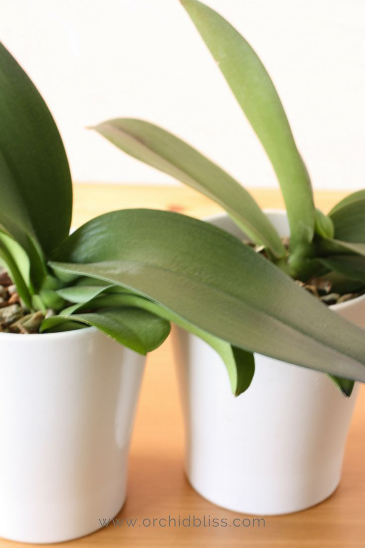 How To Repot An Orchid A Beginners Guide Orchid Plants Plants