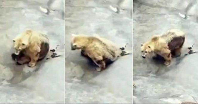 Lassen Sie den Bären aus dem Belgrader Zoo Petition erstellt Aug 1, 2016 Soraya Berenguer Labrador Zaragoza, Aragon, Spanien  Adressiert an Bürgermeister von Belgrado Siniša Mali Diese Petition wu…