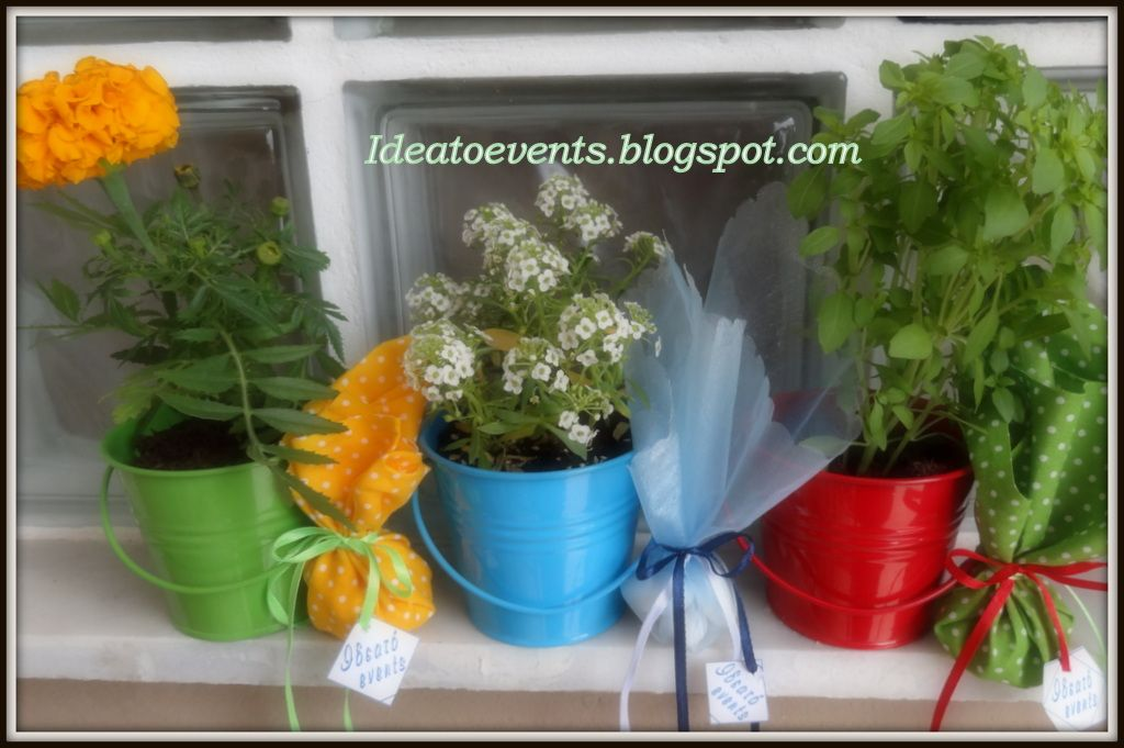 Μπομπονιέρες βάπτισης γλαστράκι βασιλικός, κατιφές  και ασπρολούλουδο συνδυασμένα  με υφασμάτινα πουγκάκια. Flower pots Christening favors.